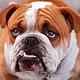 Bertram Bulldogs's Profile